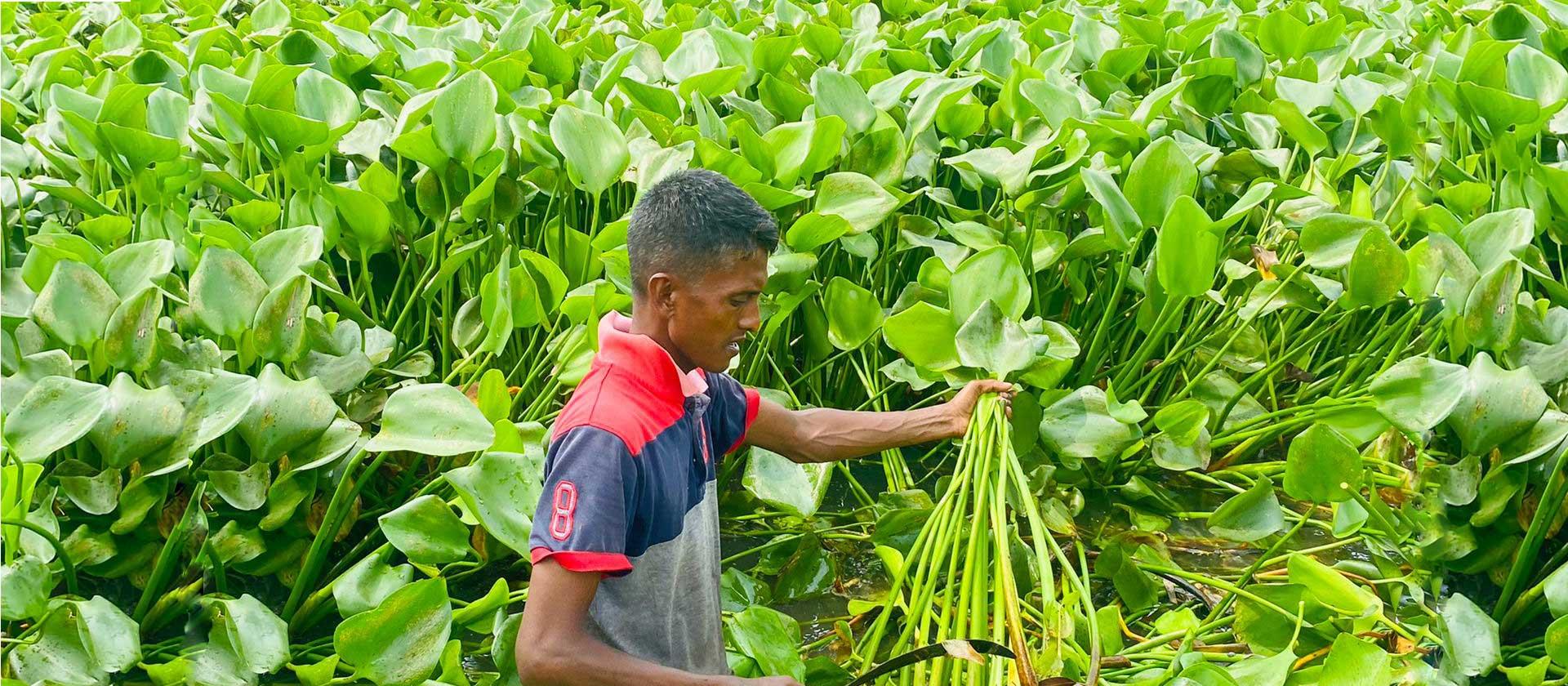 Eco Bangla Jute Limited